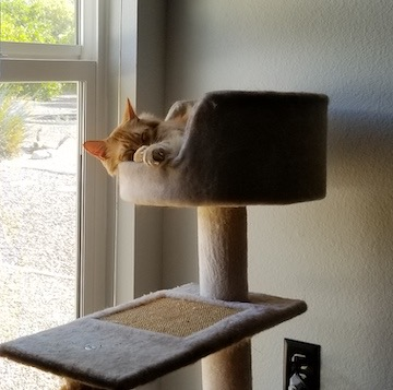 i found a cat that fits in the cat tree